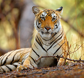 Wildlife Holiday Packages in India