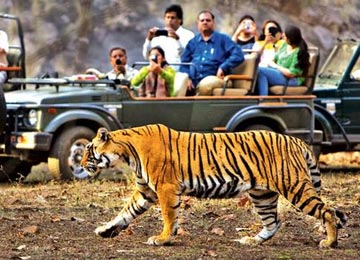 Ranthambore and Corbett Tour