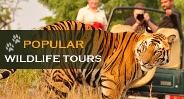 Popular Wildlife Tours