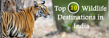 Top 10 Wildlife Destinations