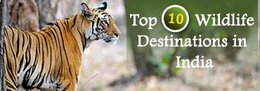 Top 10 Wildlife Destination