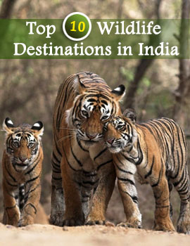 Top 10 Wildlife Destination