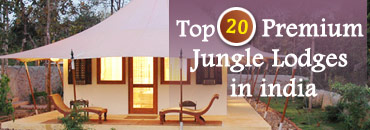 Top 20 Premium Jungle Lodges
