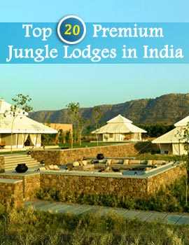 Top 20 Jungle Lodges