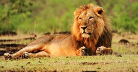 Wildlife Safari in Gujarat