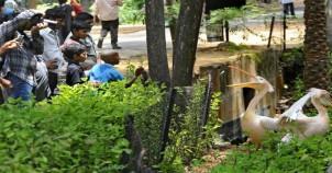 Indira gandhi zoological park visakhapatnam