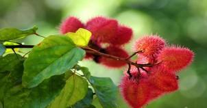 Nagarhole national park flower