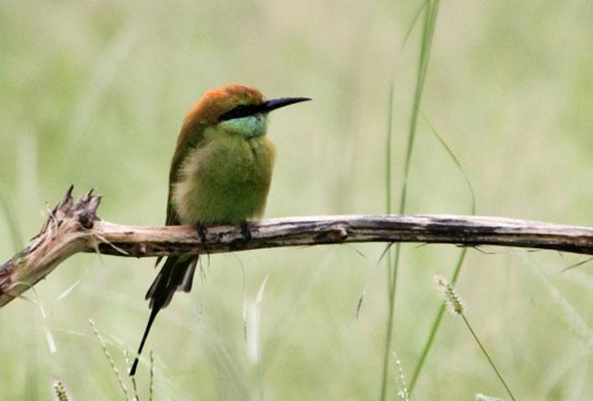 Madhav national park birds