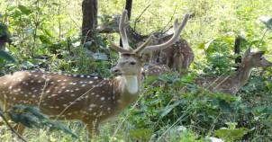 Sanjay Dubri Wildlife Sanctuary
