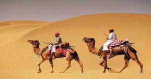 Camel safari jodhpur