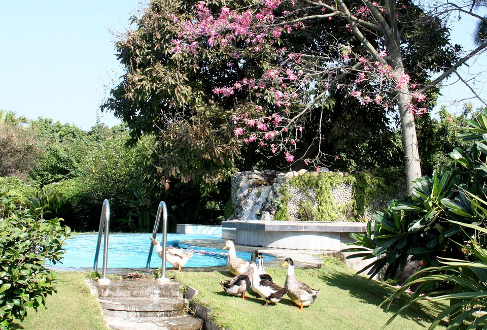 tree-of-life-homstead-corbett-swimming-pool