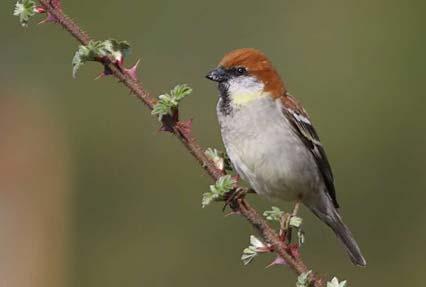 Bird watching in the mountain ranges of Paro