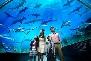 aquarium and marine museum sabah