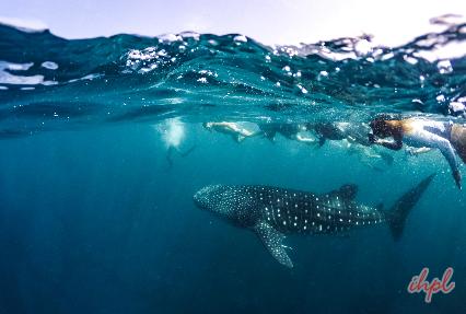 cebu swimming in maldives
