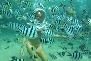 underwater walk in pattaya