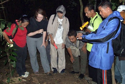 taman negara night walk
