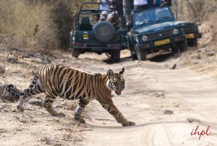 jeep safari in bandhavghar park