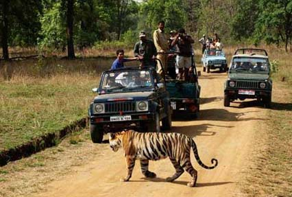 bandhavgarh national park 4