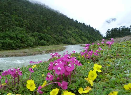 Yumthang Flower Valley, Sikkim