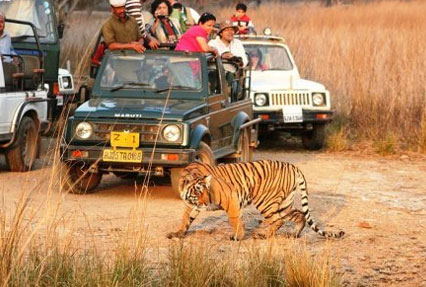 Jeep safari, Ranthambore