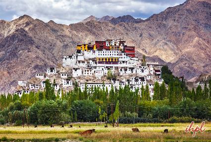 Thiksey Monastery Leh