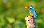 Kumarakoam Bird Sanctury