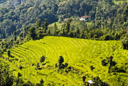 Kalimpong Town in West Bengal