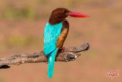 wild life century bird