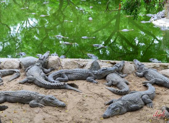 Crocodile Farm, Mahabalipuram