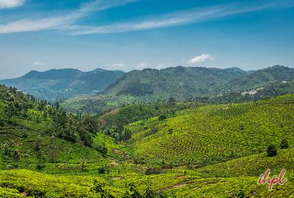 Tea Gardens, Munnar