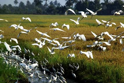Kumarakom Bird Sanctuary Kerala