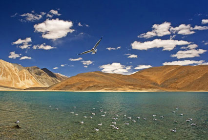 Pangong Lake in Leh Ladakh