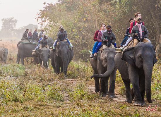 Kaziranga National Park Kanchanjuri