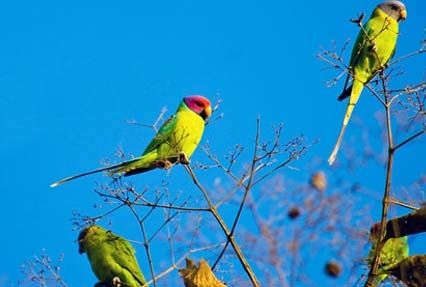 birds in gir forest