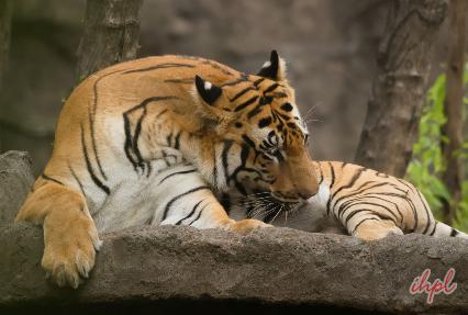 adventure in rajasthan