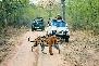 jeep safari in ranthambore