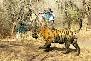 Rajasthan Ranthambore