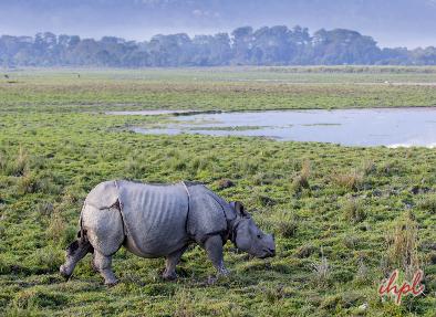 Kaziranga national park jeep safari