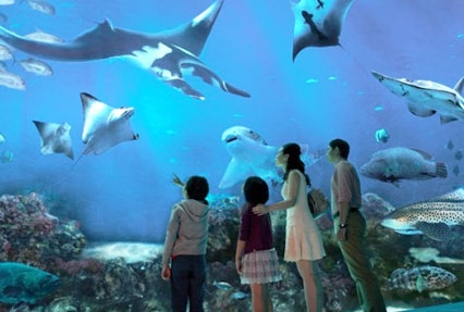 sentosa island sea aquarium