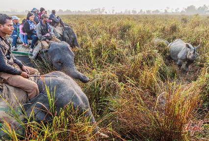 Elephat ride
