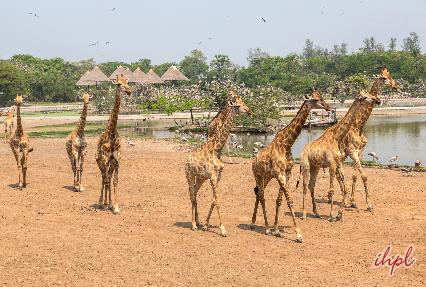 safari world bangkok
