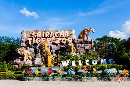 tiger zoo sriracha