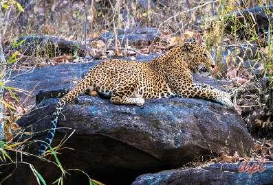 3 Days Tour to Satpura National Park
