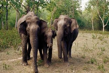 3 Days Tour to Bandipur National Park