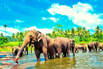 4 Days Gems of Sri Lanka Tour