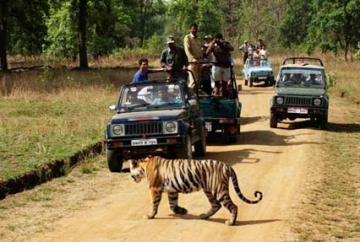 India Tiger & Tribal Tour
