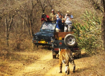 Jeep Safari to Nahargarh Sanctuary