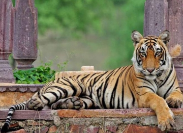 Enjoy Wildlife Safari at Ranthambore