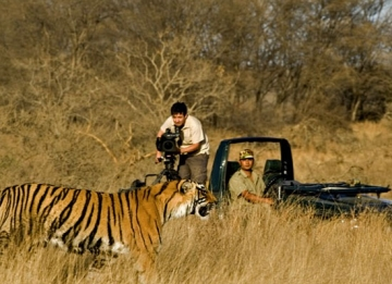 Wildlife in Panna National Park