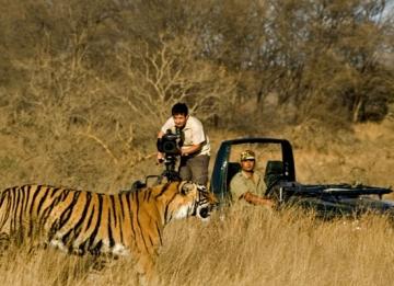 Wildlife in Panna National Park